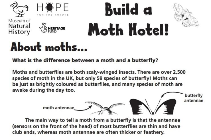 Illustrative image of moth hotel instruction sheet